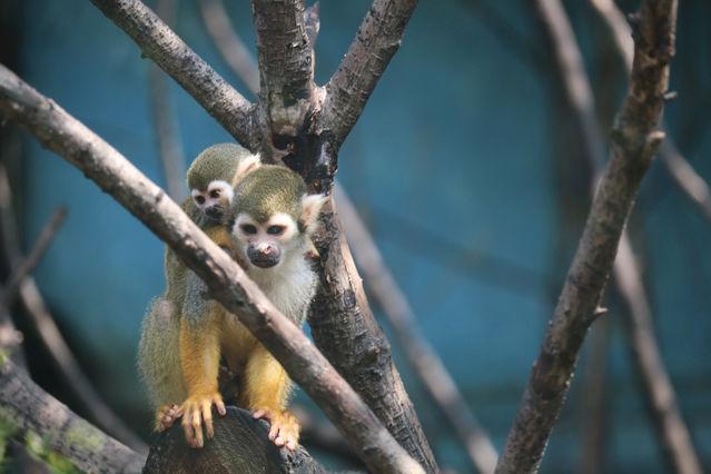 【青年眼中的世界】松鼠猴