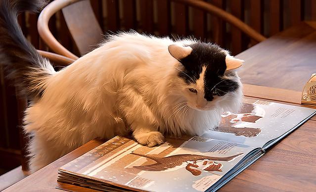 故宫的猫敦煌的狗,当博物馆有了动物代言人