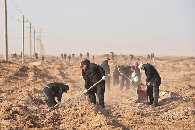 新疆铁路搭建千里绿色长廊