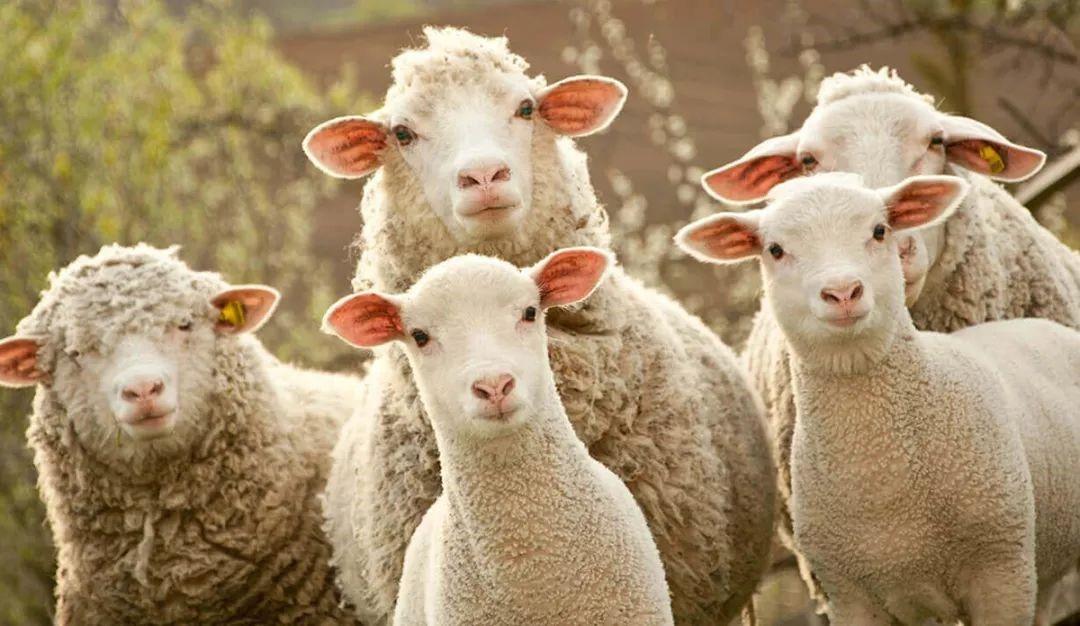 """""""薅羊毛""""导致果农破产,你占的便宜是别人的血汗"""